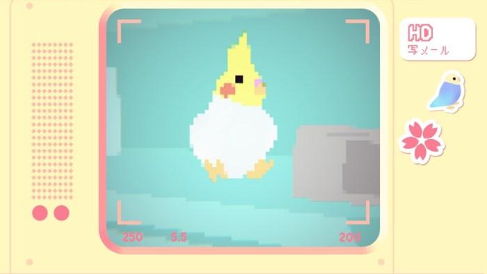 Toripon é um game relaxante de fotografar pássaros pixelizados