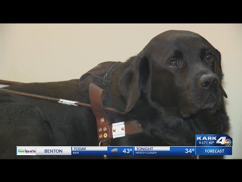 Watch: New rule could ban all emotional support animals from flying on planes, except trained dogs