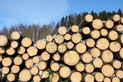troncos abeto