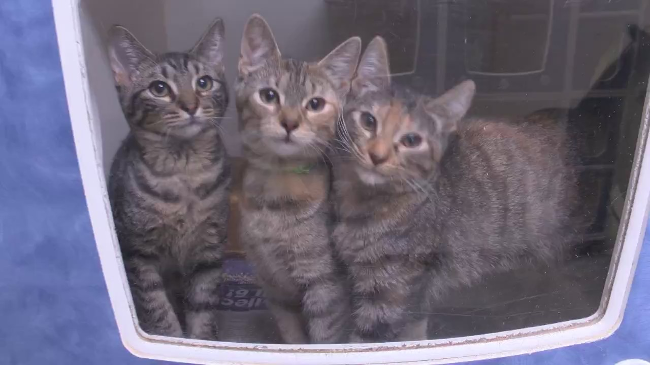 KTAL NBC 6 Clear the Shelters recap
