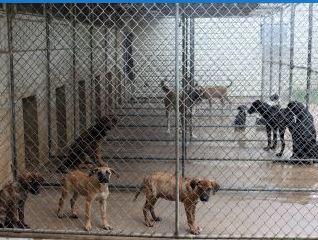 Marshall Animal Shelter 3-27-19_1553716057821.JPG.jpg