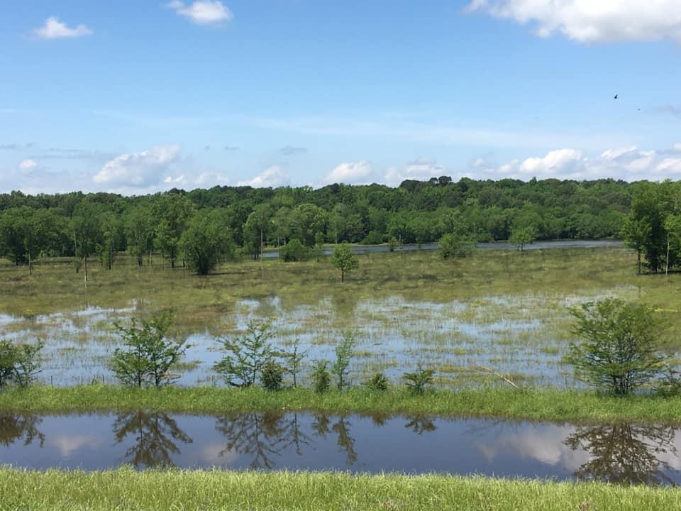 12 Mile Bayou beginning to flood per CPSO (2) 050719_1557261509520.jpg.jpg