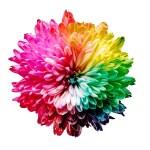 Koło kolorów – jak tworzyć palety barw