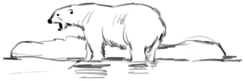 """""""Eisbären sind geschützte Tiere und dürfen nicht angelockt, gestört oder verfolgt werden."""", sagt das Spitzbergen-Umweltgesetz (Svalbard miljolov), Paragraph 30 (c) Bild KerstinHeymach"""