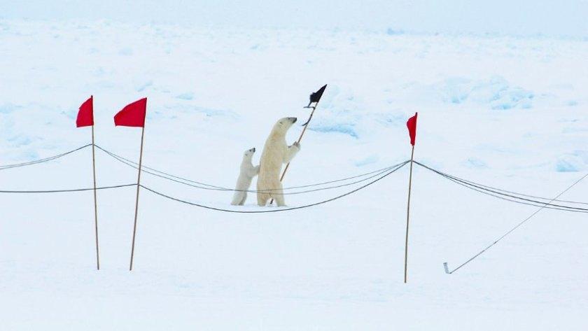 Eisbärenfamilie der Polarstern