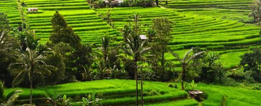 Cycling di Bali - Baturiti to Jatiluwih Trip