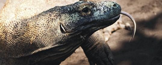 Bali BIrd Park Komodo