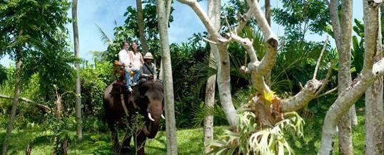 Outing Bali Gajah Sumatera