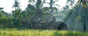 Outing Bali Naik Gajah