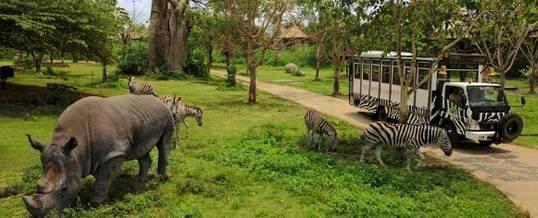Wisata Petualangan Bali Safari And Marine Park