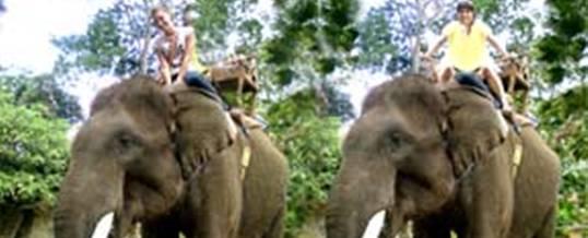 Rafting di Bali Bakas Elephant