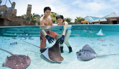 Adventure Cove Waterkpark - Ray Bay