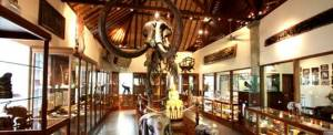 Bali Adventure Tours Museum
