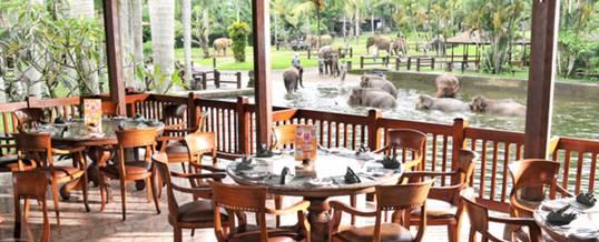 Bali Adventure Tours Restaurant