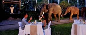 Wisata Naik Gajah Di Bali Makan Malam