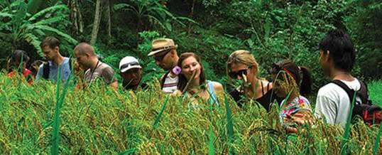 Ubud Camp Trekking Bali