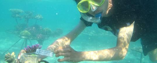 Outbound Snorkeling Pandawa Beach