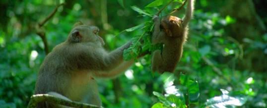 Wisata Di Ubud Monkey Forest Green