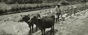 Outing Bali Membajak Sawah Desa Bongkasa 70