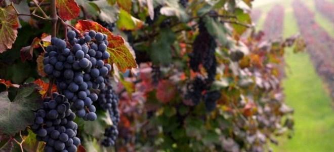 Guida Slow Wine 2017 Cinque cantine Bg segnalate - Enogastronomia Bergamo