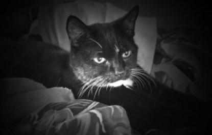 Cat in Hospice Care