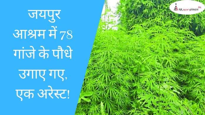 जयपुर आश्रम में 78 गांजे के पौधे उगाए गए, एक अरेस्ट