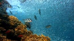koralen dreigen uit te sterven door klimaatverandering-tijd voor actie
