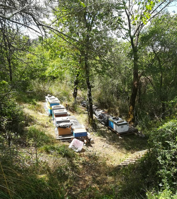 apiario forestale