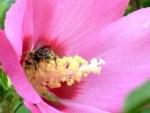 Comment soigner une allergie au pollen avec les huiles essentielles?
