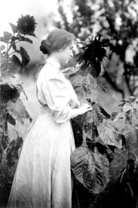 Helen Keller with sunflowers. By White, 1907.