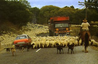 A Chrysler Avenger 1.6 GLS, shown in typical heavy local traffic conditions!