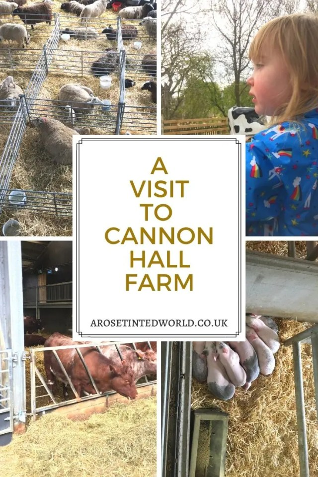 Cannon Hall Farm - is just outside Barnsley in South Yorkshire. Visit a wonderful working farm with sheep cattle and rare breeds. #YorkshireDays out in Yorkshire and the UK. #daysout #daysoutwithkids #daytrips #farmyard #placestogo #daysoutwiththekids  #farm #rarebreeds #yorkshire #daysoutinyorkshire