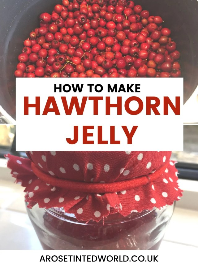 How To Make Hawthorn Jelly - a delicate flavoured jam perfect as an accompaniment to cheese and meats. Forage for free food among hedgrows and trees, then cook haws from the Hawthorn tree to create this wonderful jam. Find hawthorn berries on the trees in Autumn / Fall. Full of nutrients such as flavinoids, antioxidants and vitamins. Help your bodies immune system and improve your immunity to viruses. Frugal living. A brilliant homemade gift. #hawthornjelly #hawthornjam #forage #foragingrecipes