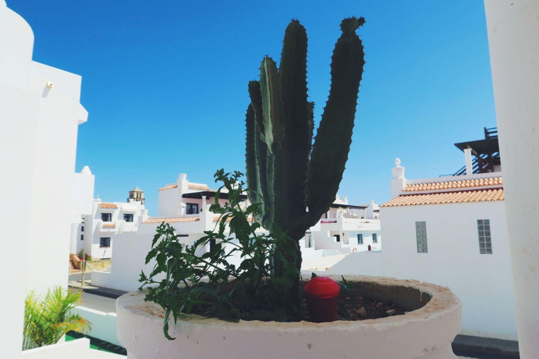 Cactus in Corralejo
