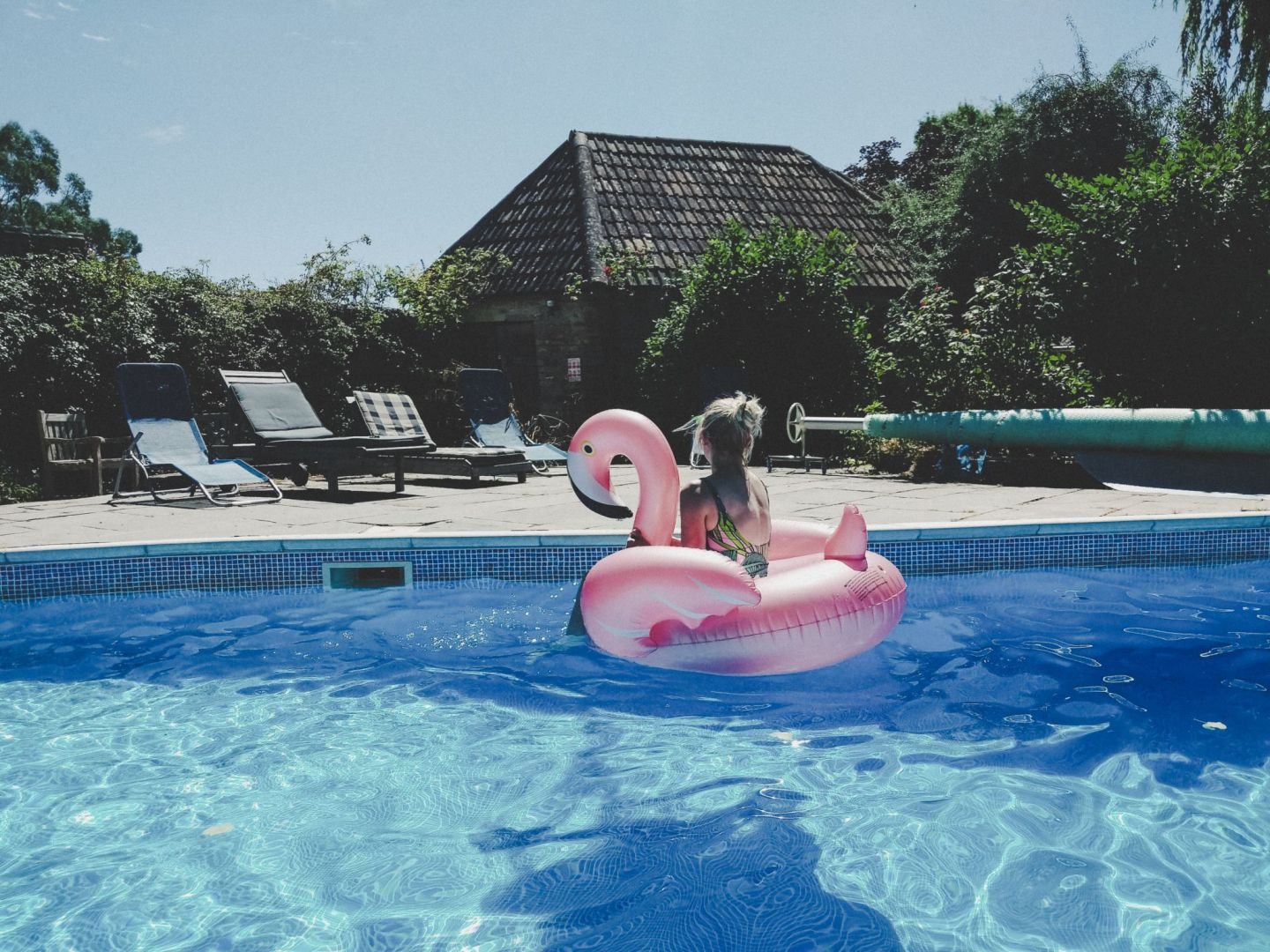 flamingo toy in swimming pool