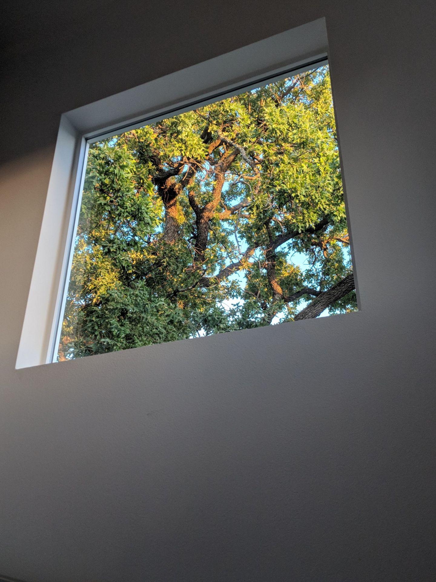 trees from the window