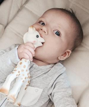 baby Alba and Sophie giraffe