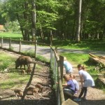 Wildpark Pössinger Au Landsberg am Lech