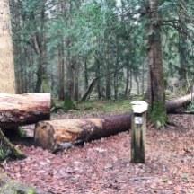 Eine herrliche Wanderung durch den seltenen Eibenwald bei Wessobrunn