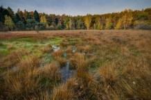 swamp-1017458_1280