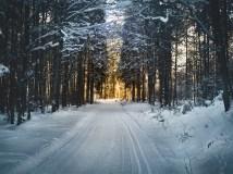 cross-country-skiing-2065439_1280