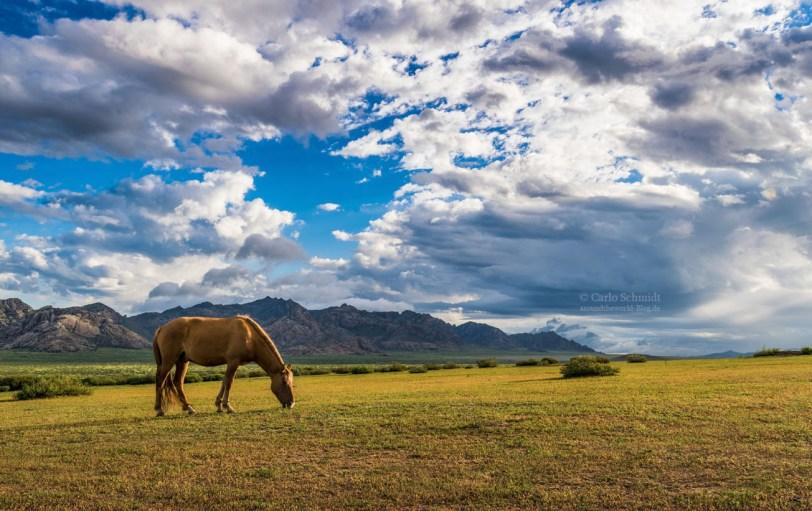 Pferd in der Mongolei