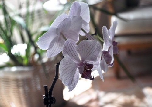 Orquídea en invierno