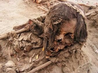Tanto los niños como las llamas fueron traídos a la costa desde rincones remotos del Imperio Chimú para ser sacrificados, de acuerdo con estudios isotópicos preliminares y el análisis de la modificación del cráneo. FOTOGRAFÍA DE GABRIEL PRIETO