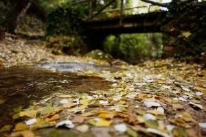 puente cauce y corriente con hojas doradas plateadas en chorreras valdepeñas de jaen