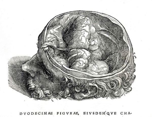 1543-Vesalio-251