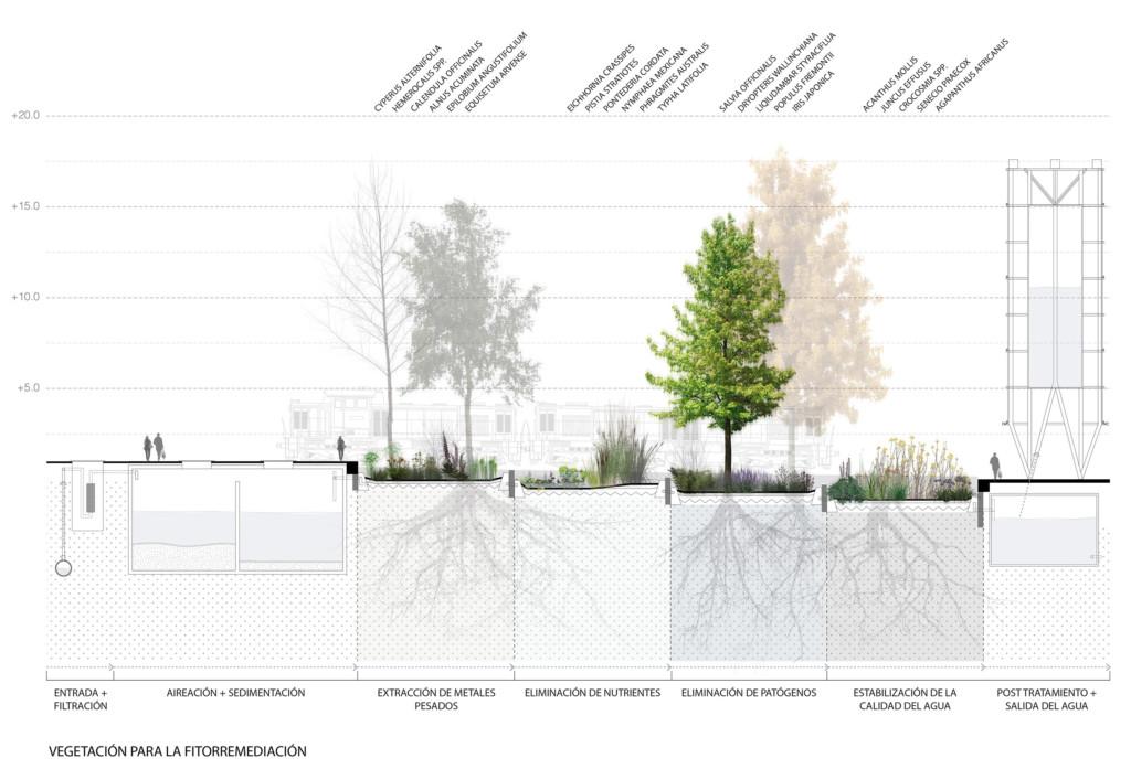 vegetation section phytoremediation 01122016