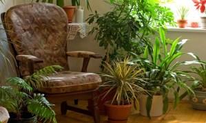 humedad por condensación (plantas interiores)