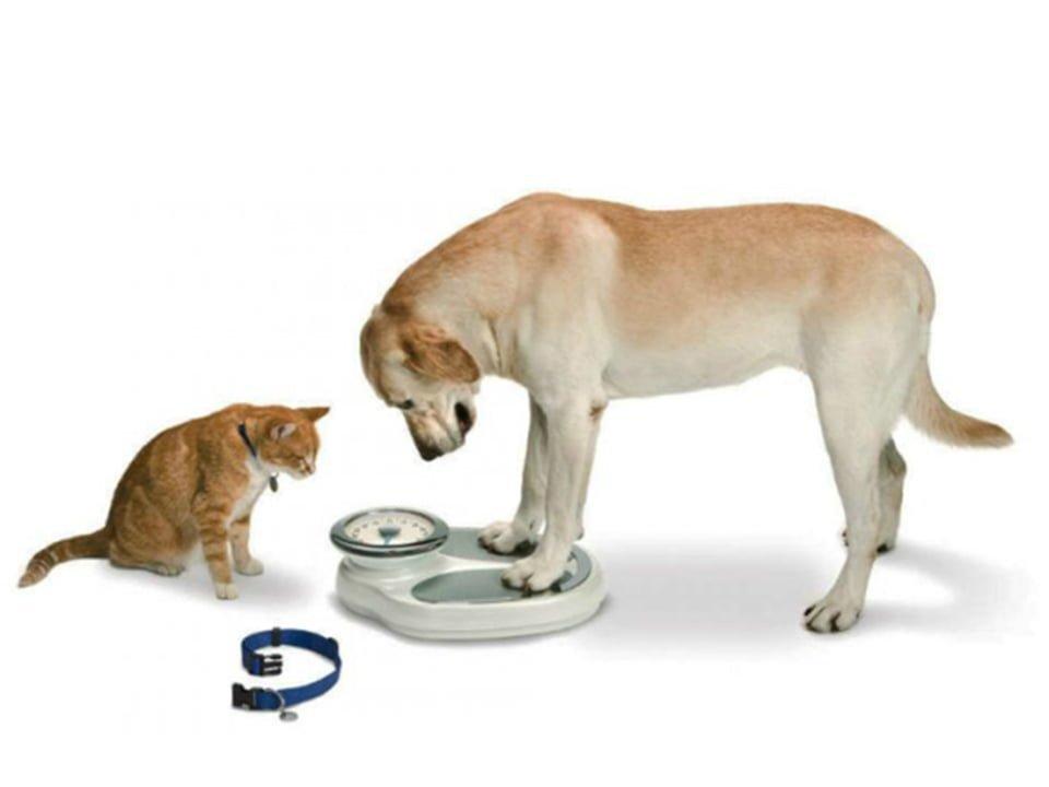 Obesidade em cães e gatos, mau comportamento do animal ou do dono?