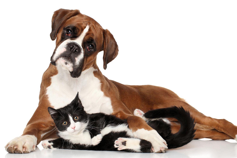 Neoplasias em animais de companhia